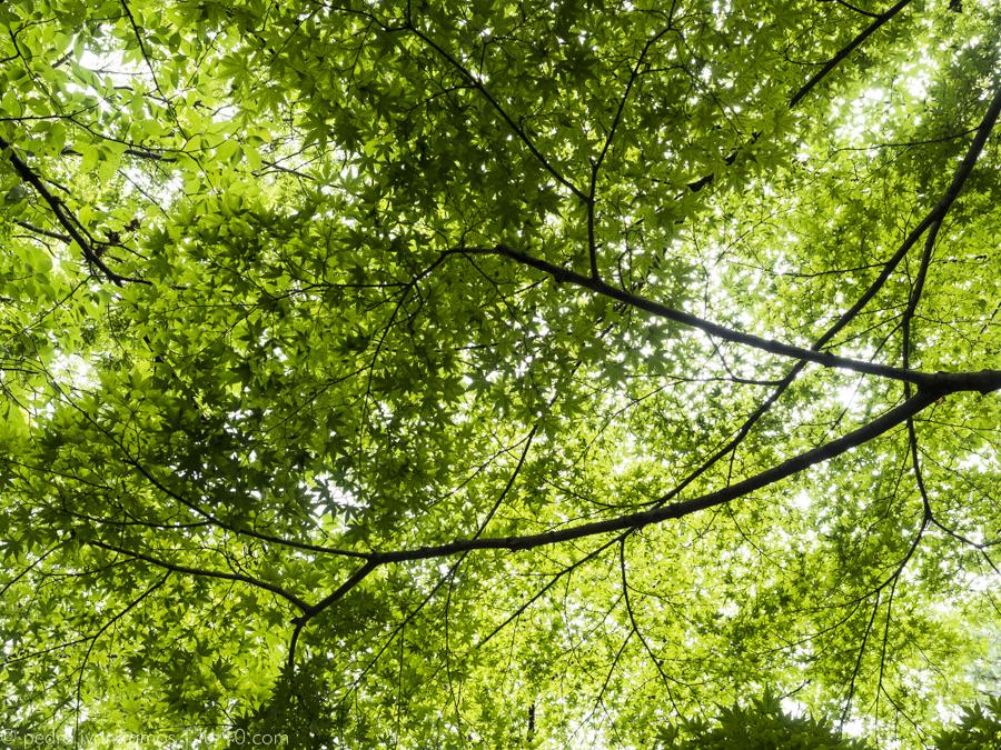 un arce, por ejemplo. luz10, kyoto pedro ivan ramos martin