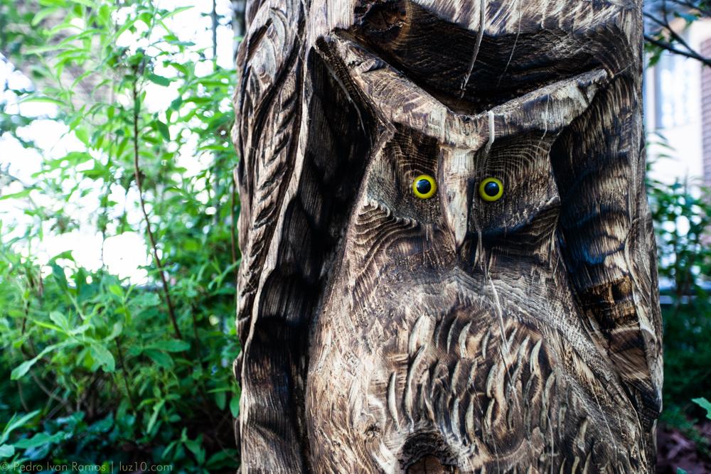 © pedro ivan ramos martin luz10 Owls aren't what they seem.