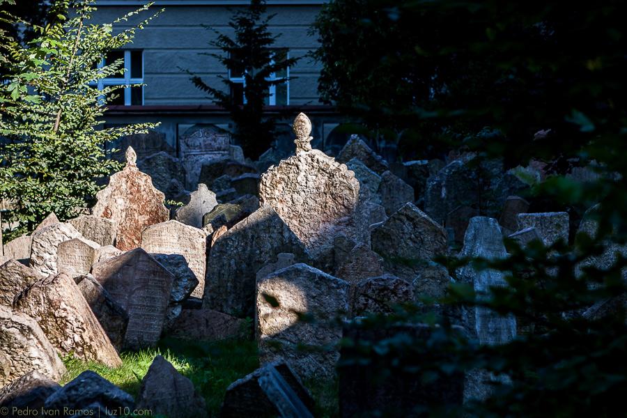© pedro ivan ramos martin luz10 ciervos corzos y gacelas