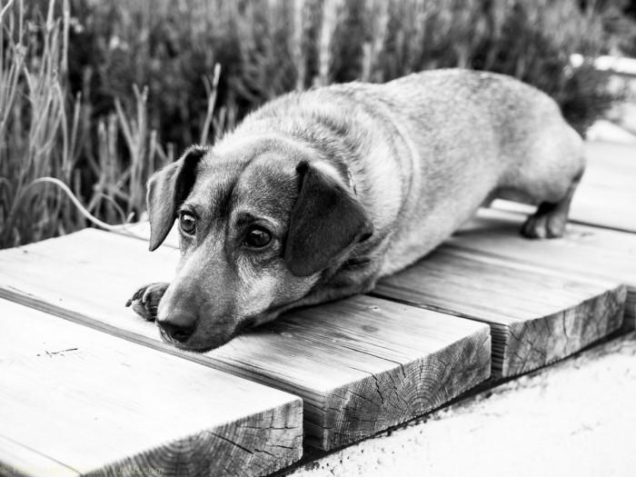© luz10.com perro kay bojesen