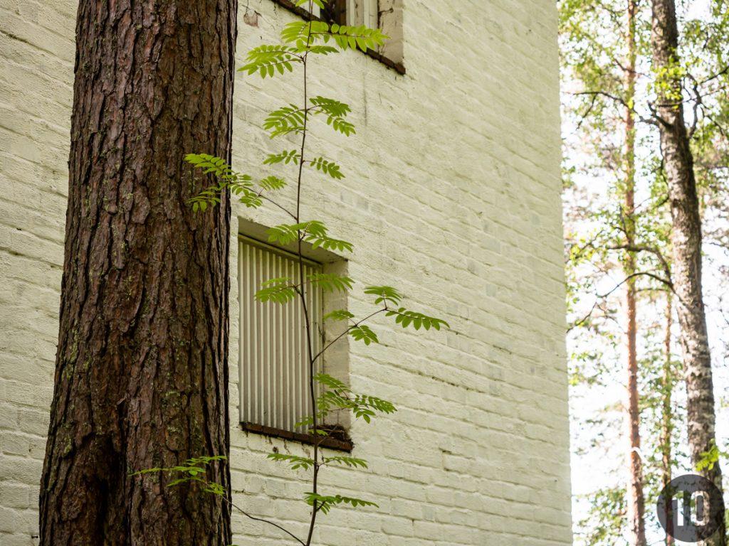 blanco y puro © luz10.com