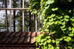 componga con la naturaleza © luz10.com
