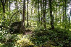 claro en el bosque ¿dónde? © luz10.com