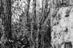 luz10.com | © pedro ivan ramos martin | fotografía